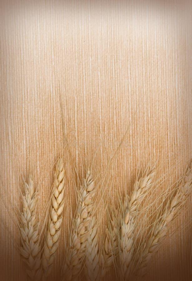 пшеница ушей предпосылки стоковые фото