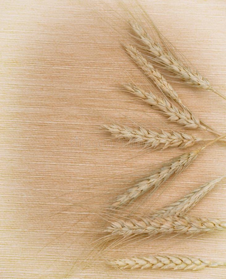 пшеница ушей предпосылки стоковая фотография rf