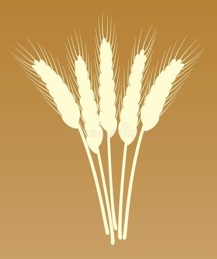 пшеница ушей