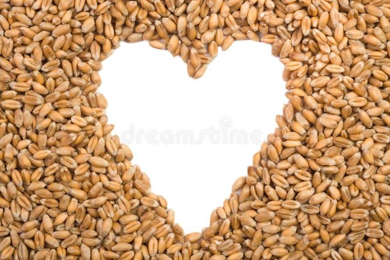 Download пшеница стоковое фото. изображение насчитывающей ферма - 18385202