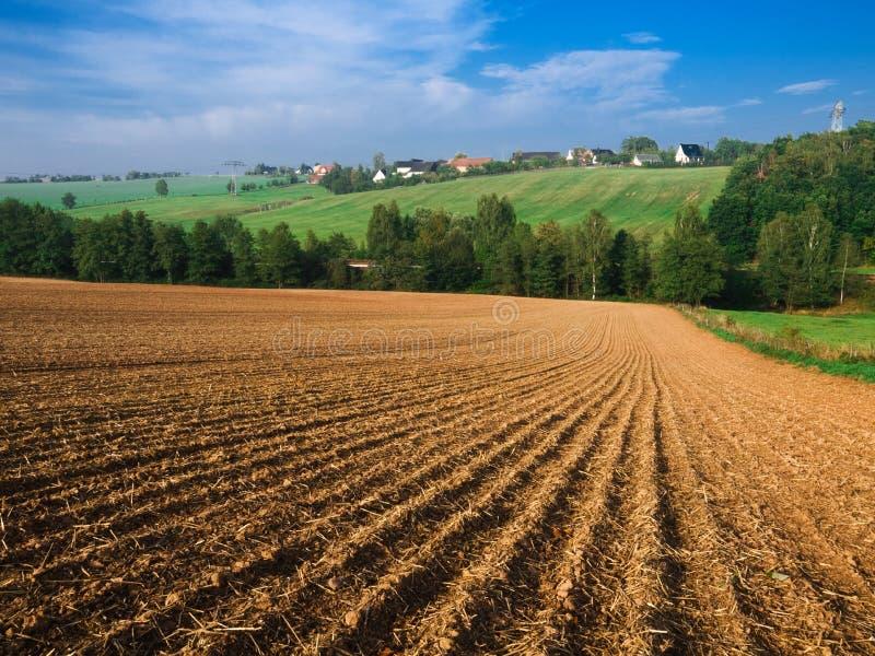 пшеница kansas фермы стоковые фотографии rf