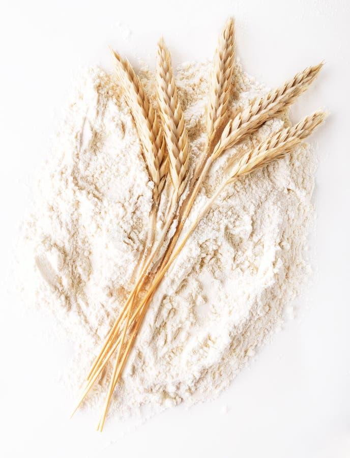 Пшеничная мука стоковое изображение rf