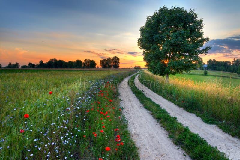 Пшеничное поле 11 дороги стоковые изображения