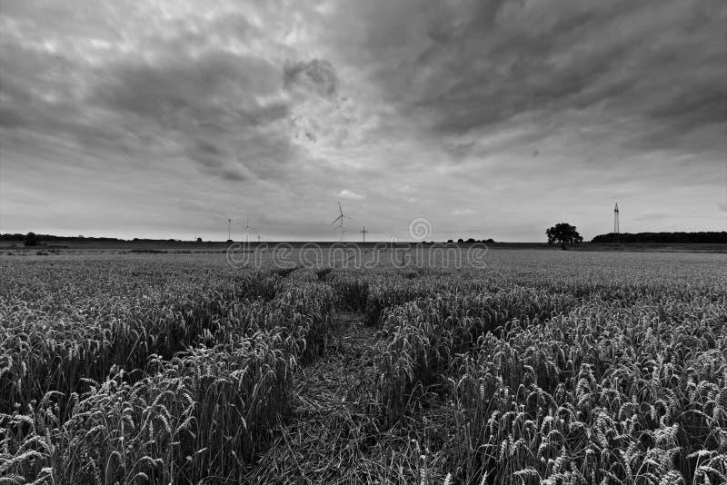 Пшеничное поле с тяжелыми облаками в следах ( неба и трактора; черно-белый стоковые фото