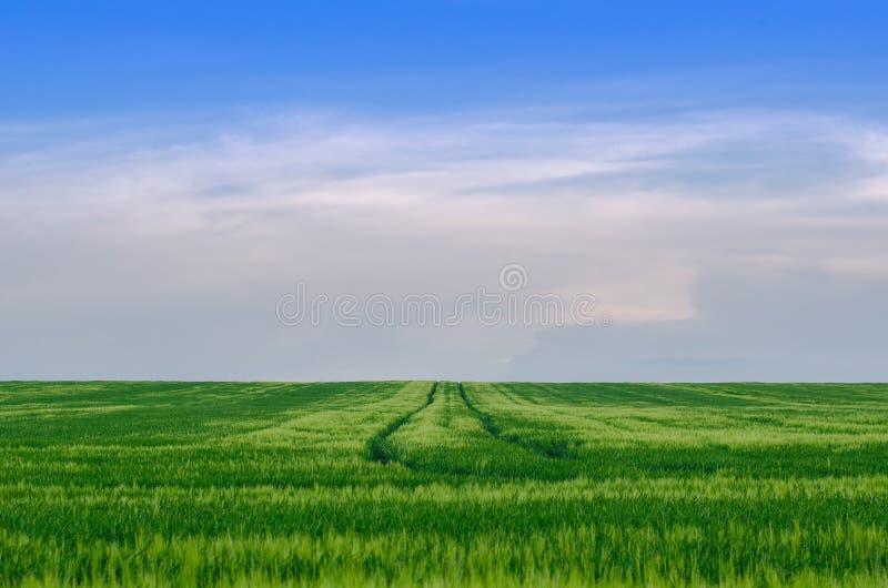 Пшеничное поле, Украина стоковая фотография