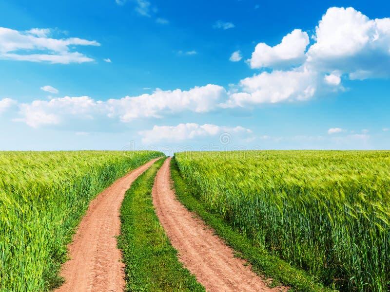 Пшеничное поле, извилистая дорога и голубое небо с облаками стоковые изображения rf