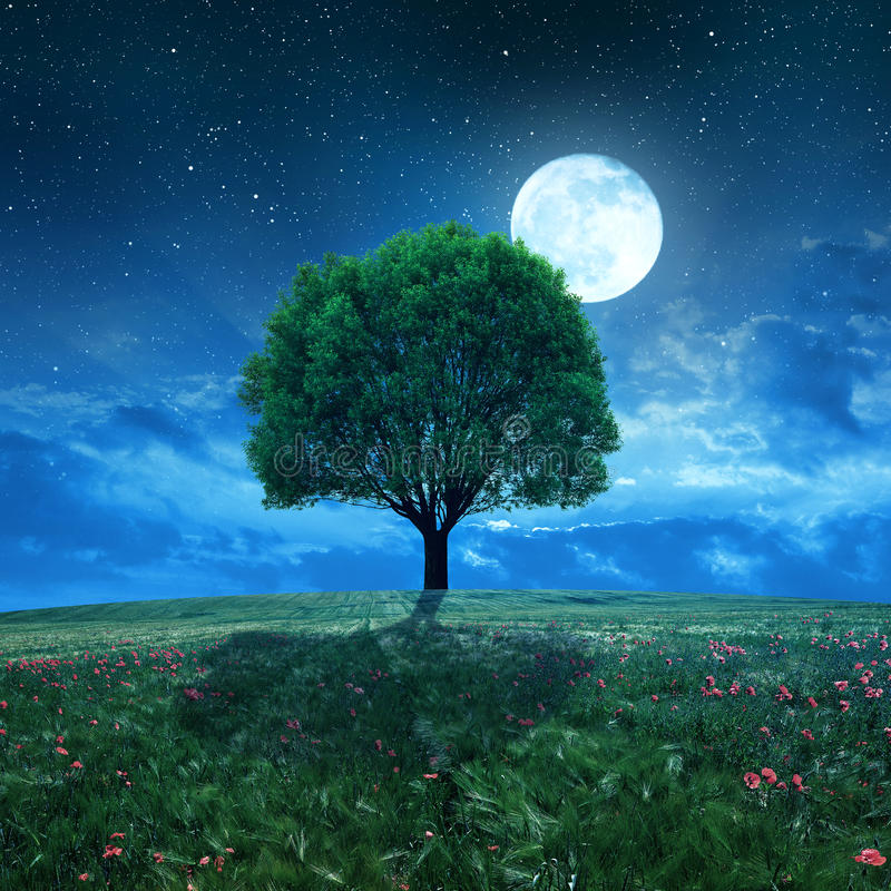 Пшеничное поле и дерево в ночном небе стоковое фото
