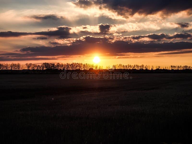 Пшеничное поле и заход солнца стоковые фото
