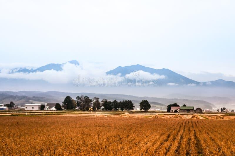 Пшеничное поле после сжатый стоковое фото