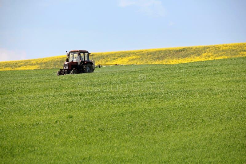 Пшеничное поле трактора распыляя в весеннем времени стоковые изображения