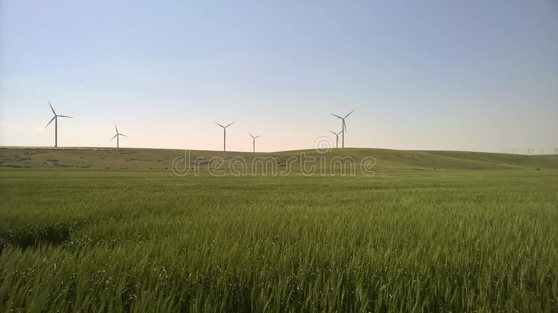 Пшеничные поля стоковое фото