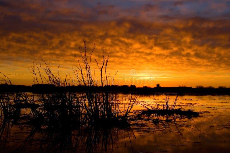 Download пылая небо стоковое изображение. изображение насчитывающей облако - 479219