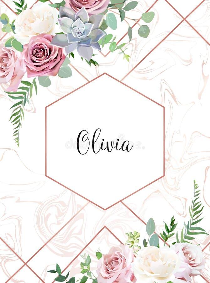 Пылевоздушный пинк, сметанообразная ая-бел античная роза, echeveria суккулентное, бледные цветки иллюстрация штока