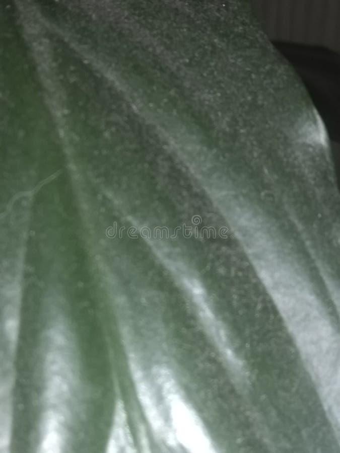 Пыль на листе стоковая фотография