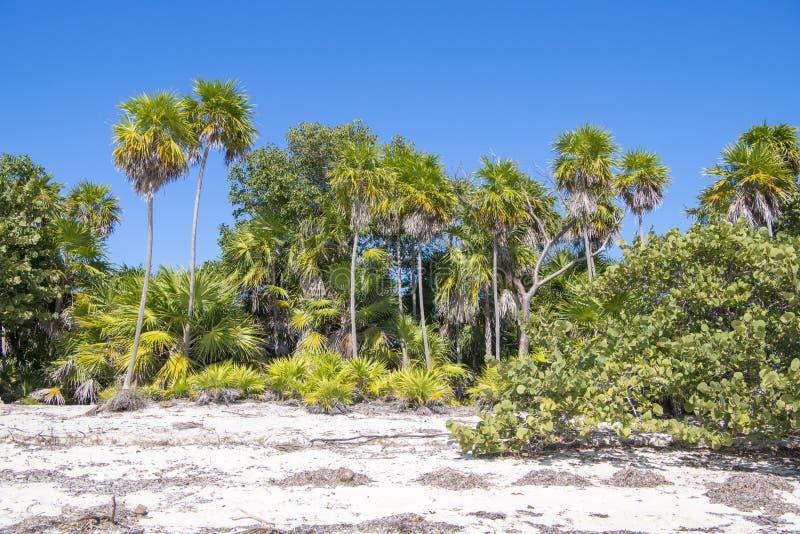 Пышная растительность на естественном пляже в тропах стоковые изображения