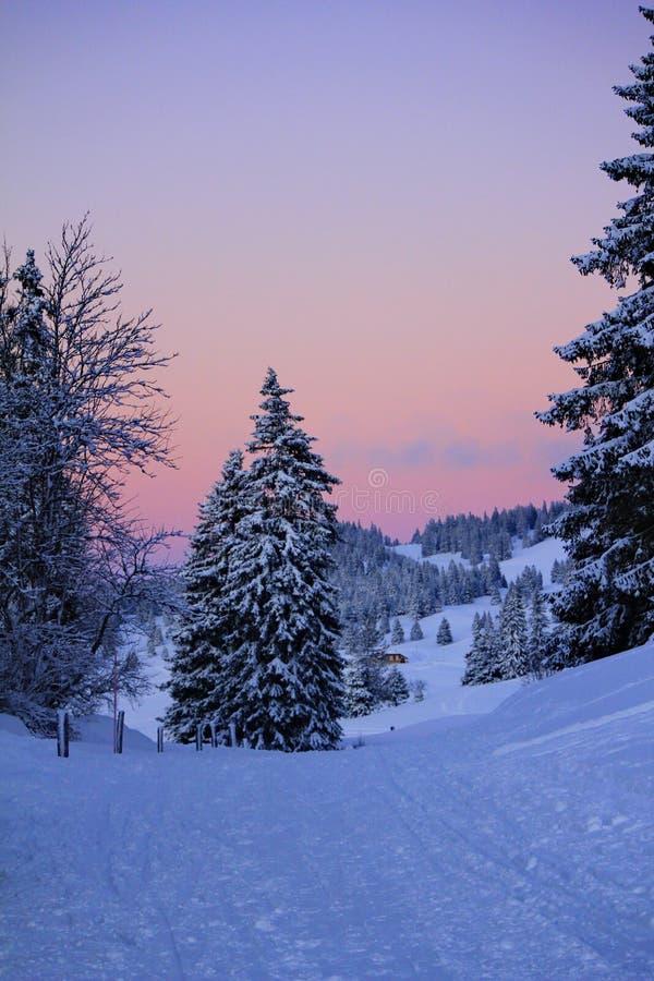 Пышный ландшафт зимы стоковое изображение
