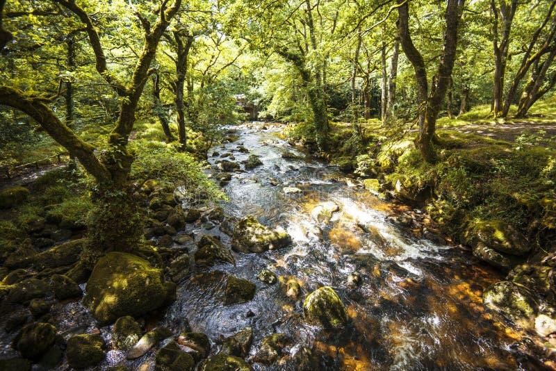 Пышный пейзаж полесья в древесинах Dewerstone на южном крае Dartmoor, Девона, Англии стоковые изображения