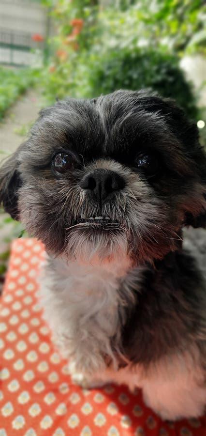 Пэт-собака - друг для жизни стоковое фото rf
