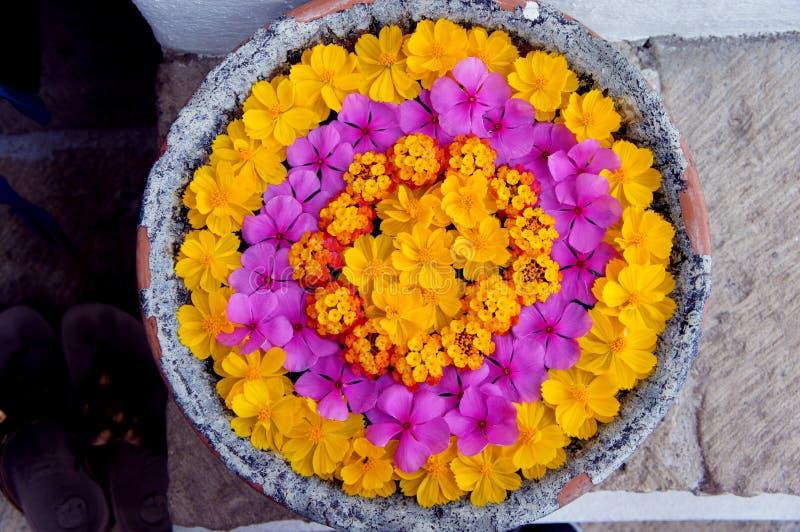плавая цветки стоковое фото rf