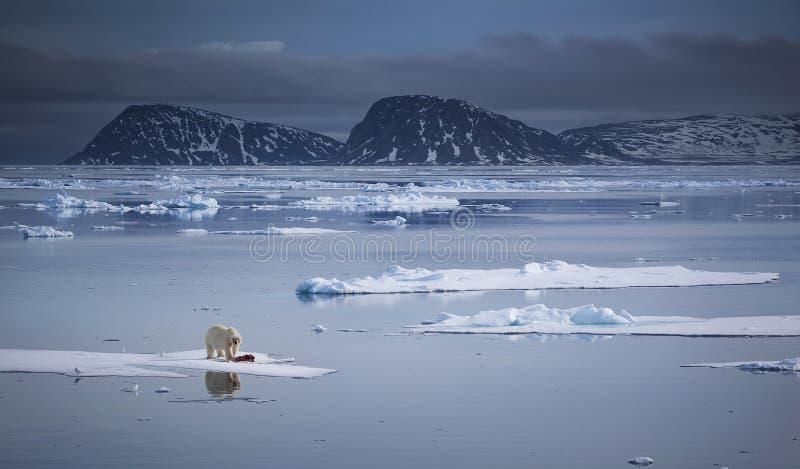 Download Плавя мир стоковое фото. изображение насчитывающей льдед - 62661946
