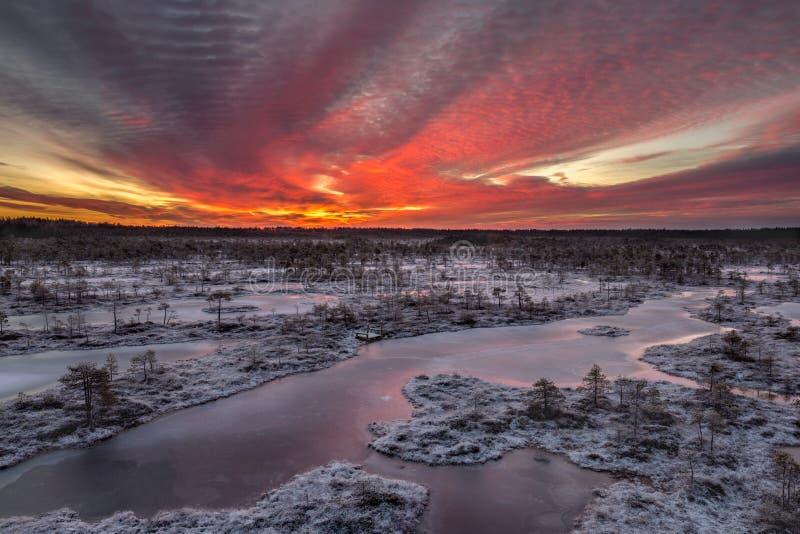 Пламенистый рассвет в трясине стоковое фото