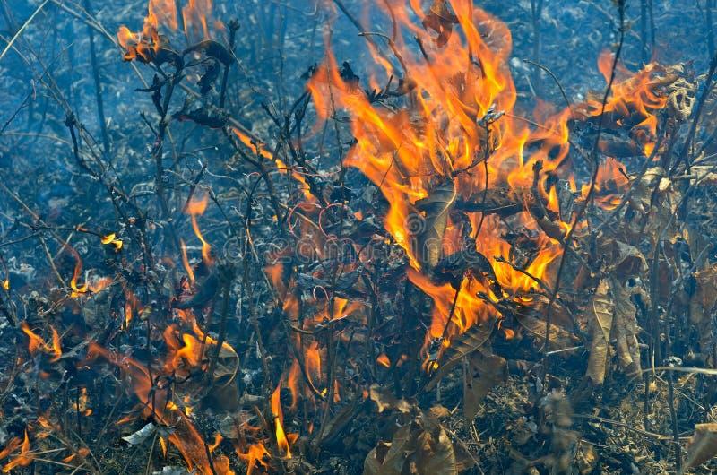 Пламя brushfire 12 стоковое фото rf
