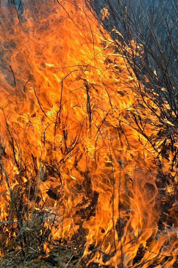 Пламя brushfire 10 стоковое изображение