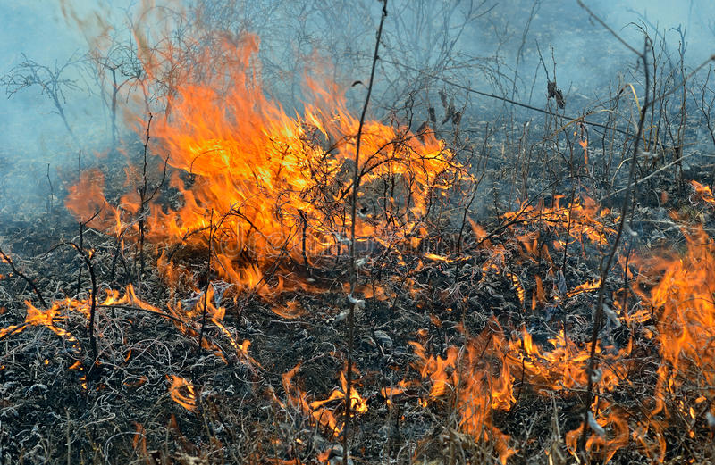 Пламя brushfire 14 стоковое изображение
