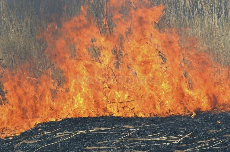 Пламя brushfire 22 стоковое изображение