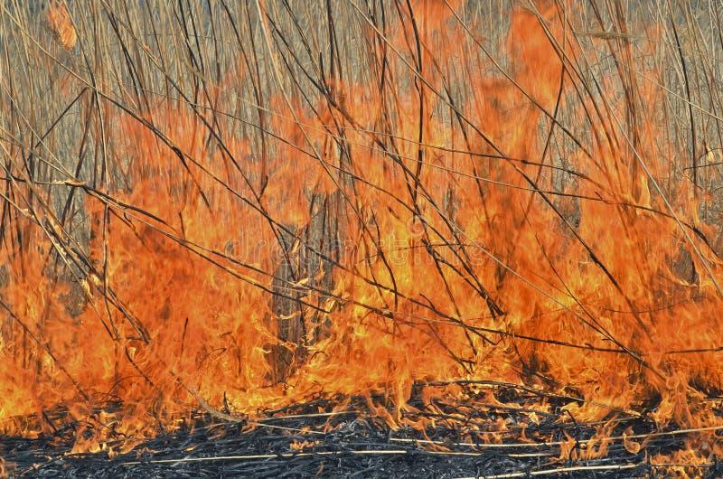 пламя 23 brushfire стоковая фотография rf