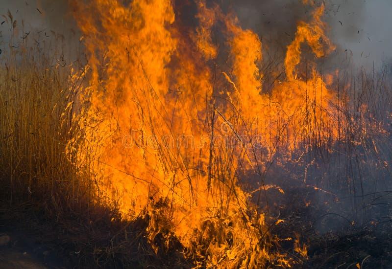 пламя 16 brushfire стоковая фотография rf