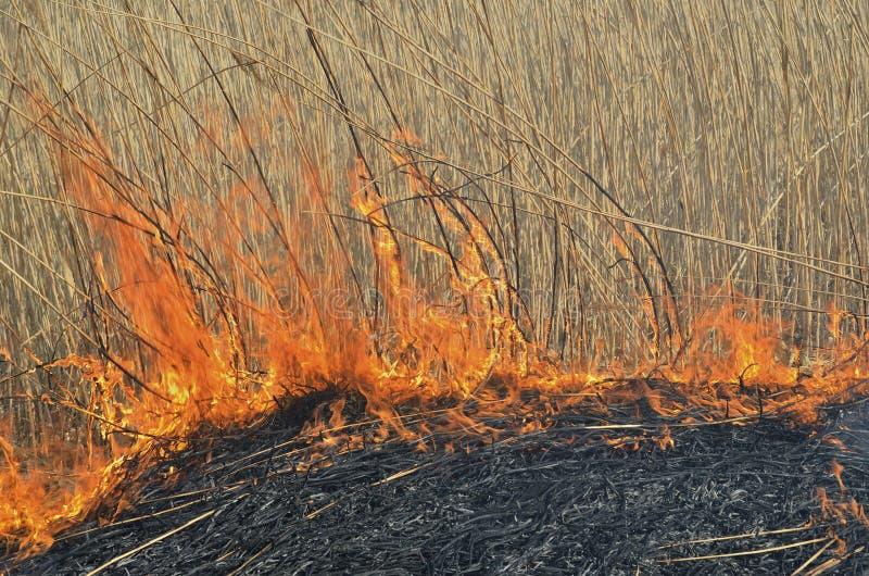 Пламя brushfire стоковое фото rf
