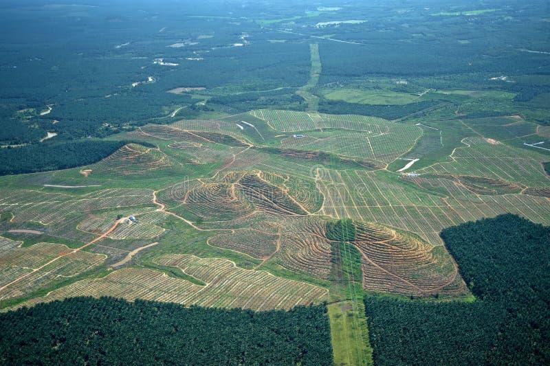 Плантации пальмового масла стоковое фото rf
