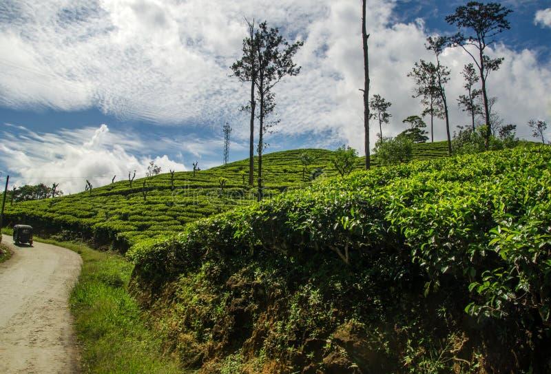 Плантации чая, страна холма, Шри-Ланка стоковые изображения