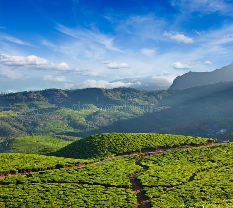 Download Плантации чая стоковое фото. изображение насчитывающей холм - 33738096