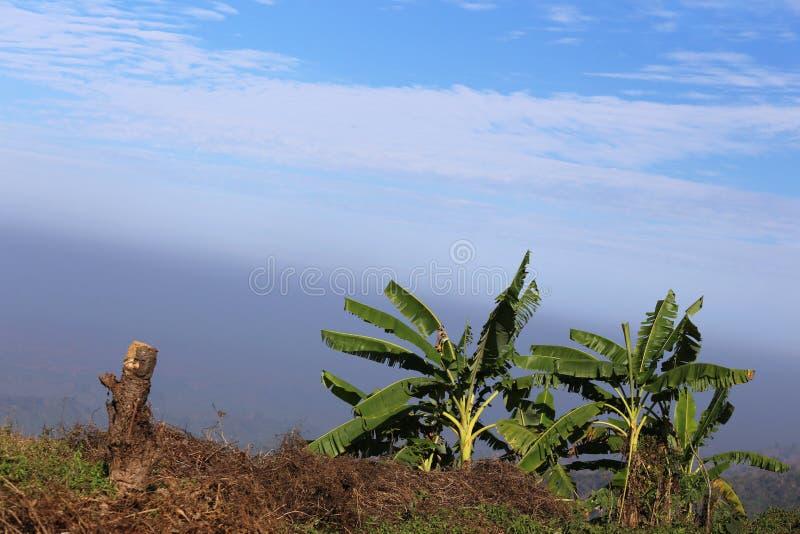 Плантация вершины холма стоковое фото