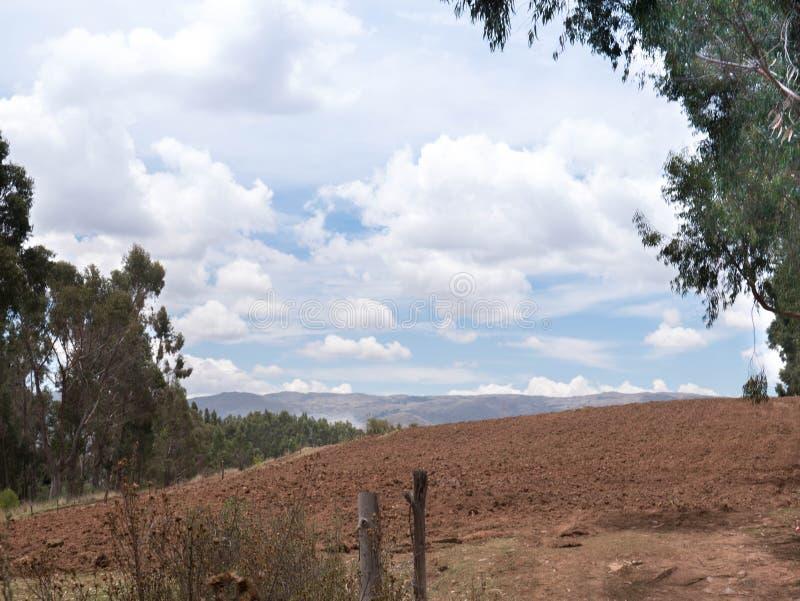 Плантация картошки на священной долине в Cusco стоковые изображения rf