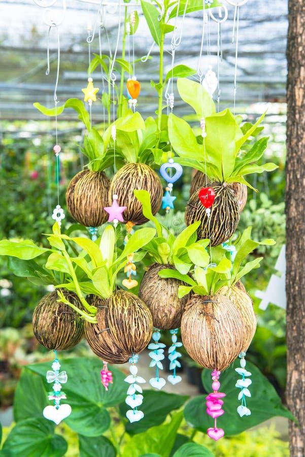 Download Плантация смертной казни через повешение Стоковое Изображение - изображение насчитывающей садовничать, петрушка: 33726217