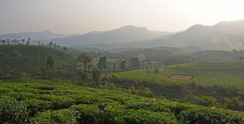 Плантация чая Wayanad стоковая фотография