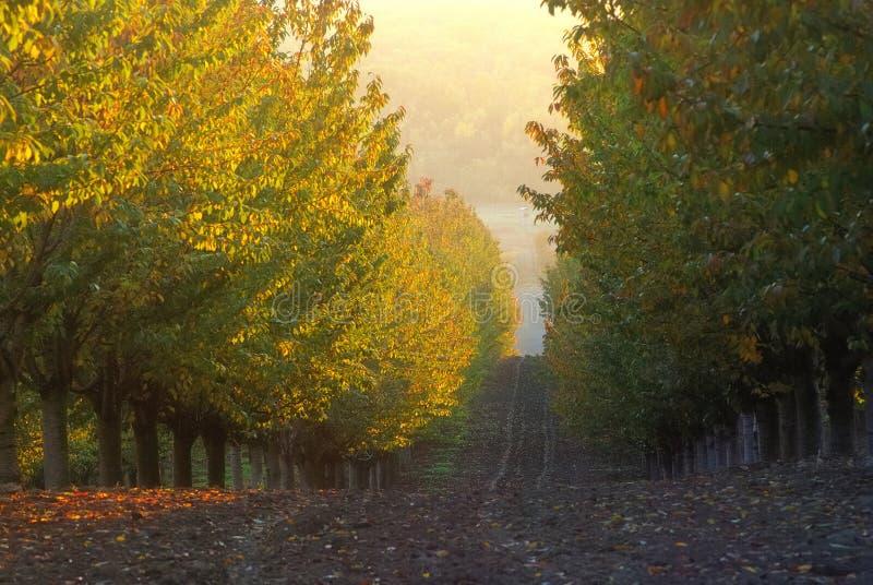 Плантация Яблока стоковые изображения rf
