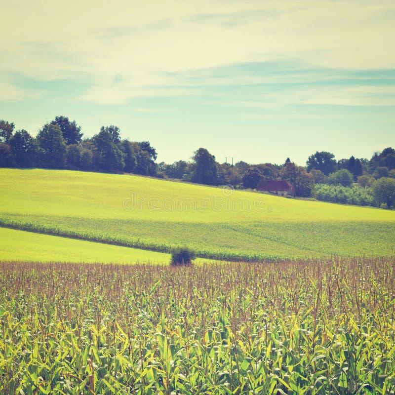 Download плантация стоковое фото. изображение насчитывающей хлопья - 41656192