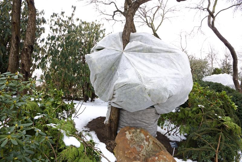 Пластичные листы покрывая дерево в зиме стоковые фото
