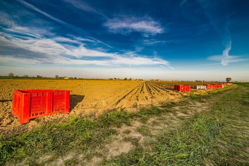 Пластичные корзины перед вспаханным полем картошки стоковая фотография
