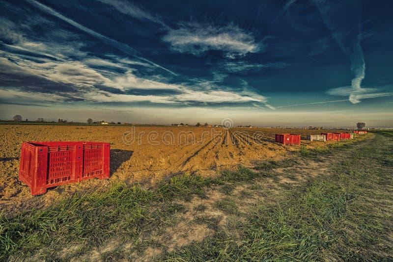Пластичные корзины перед вспаханным полем картошки стоковое изображение