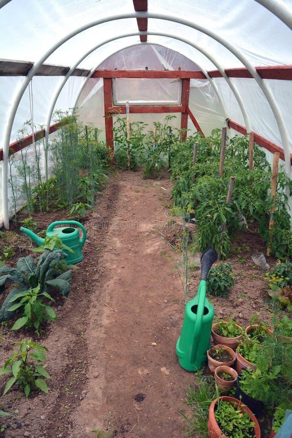 Пластичный парник с овощами и садовничая инструментами стоковое фото