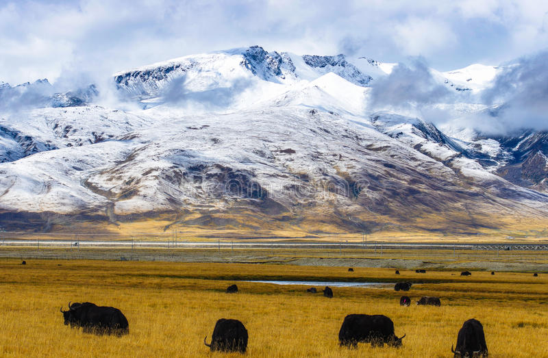 Плато Тибета стоковые изображения rf