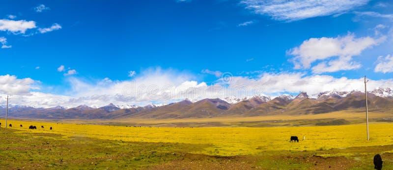 Плато Тибета стоковое изображение rf