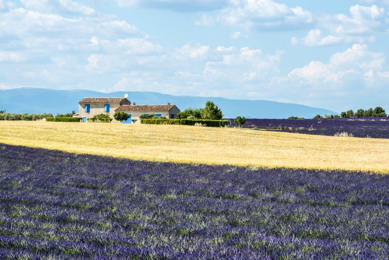 Download Плато De Valensole (Провансаль), дом и поля лаванды Стоковое Фото - изображение насчитывающей bluets, плато: 33732116
