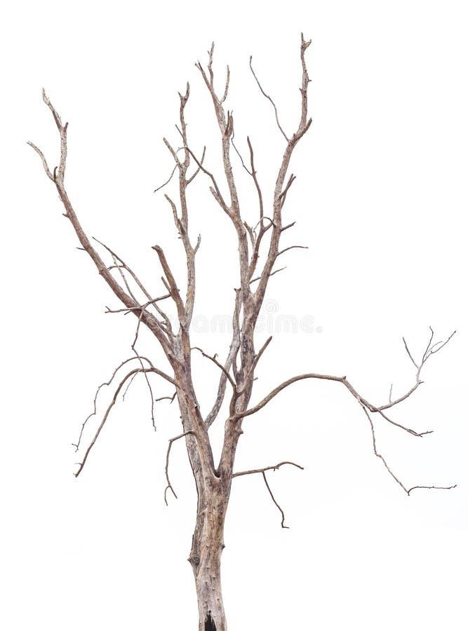 Плашки дерева изолята стоковое фото rf