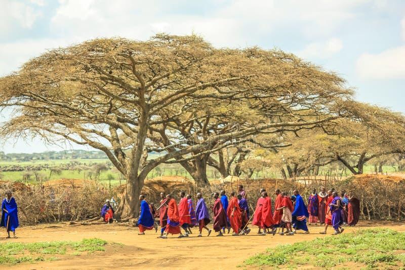 Племя Танзания Masai стоковая фотография rf
